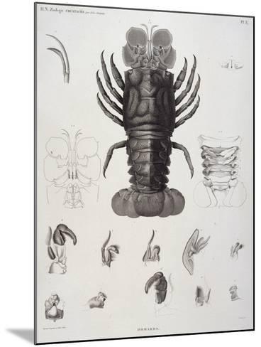 Description de l'Egypte : Zoologie, crustacé : homard-Salvadore Tresca-Mounted Giclee Print