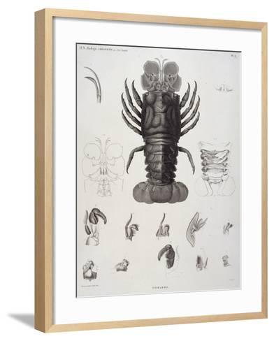 Description de l'Egypte : Zoologie, crustacé : homard-Salvadore Tresca-Framed Art Print