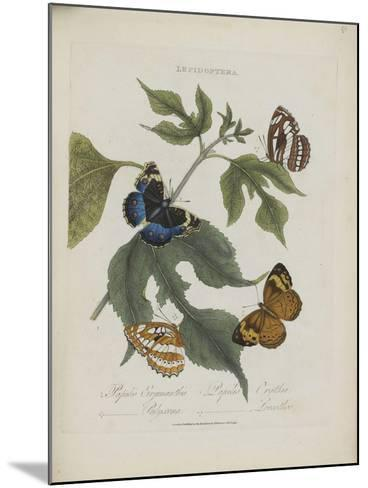 Album Donovan : an epitome of the natural history of insects in China-Edward Donovan-Mounted Giclee Print