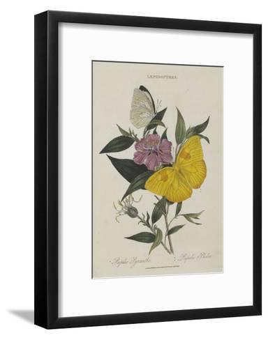 Album Donovan : an epitome of the natural history of insects in China-Edward Donovan-Framed Art Print