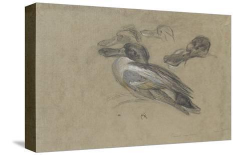 Canard et trois têtes de canard-Pieter Boel-Stretched Canvas Print