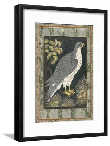 Faucon--Framed Art Print