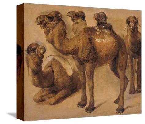 Cinq chameaux-Pieter Boel-Stretched Canvas Print