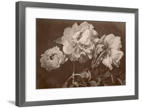 Quatre pivoines-Charles Aubry-Framed Art Print