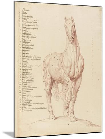 Cheval écorché, debout, la tête vue de face-Edme Bouchardon-Mounted Giclee Print