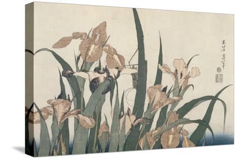 Iris et sauterelle-Katsushika Hokusai-Stretched Canvas Print