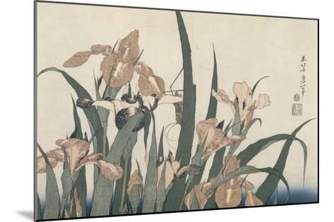 Iris et sauterelle-Katsushika Hokusai-Mounted Giclee Print