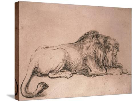 Lion couché rongeant un os-Rembrandt van Rijn-Stretched Canvas Print