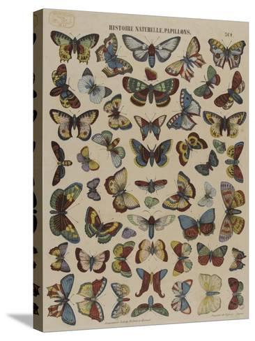Histoire naturelle : papillons--Stretched Canvas Print