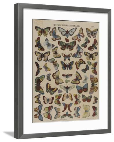 Histoire naturelle : papillons--Framed Art Print