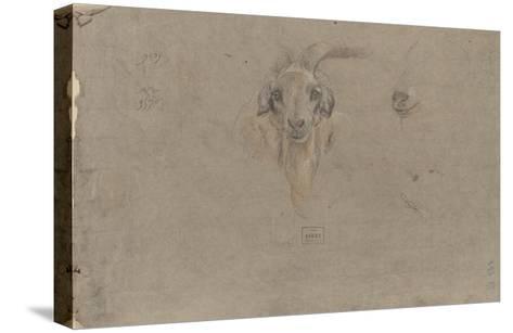 Etudes de tête de bouquetin-Pieter Boel-Stretched Canvas Print