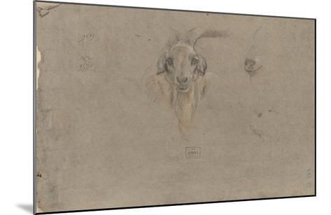 Etudes de tête de bouquetin-Pieter Boel-Mounted Giclee Print