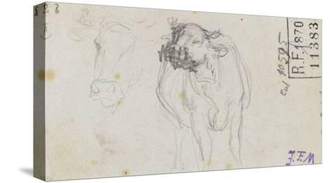 Etudes de boeuf et d'une t� de boeuf-Jean-Fran?ois Millet-Stretched Canvas Print