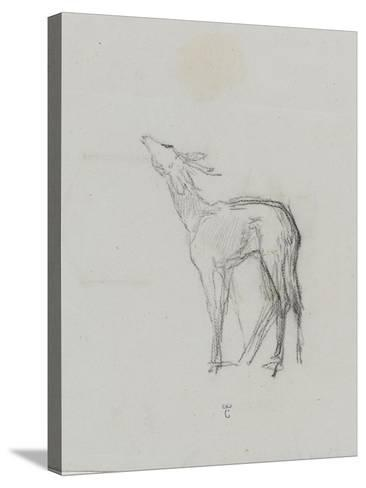 Etude de biche-Thomas Couture-Stretched Canvas Print