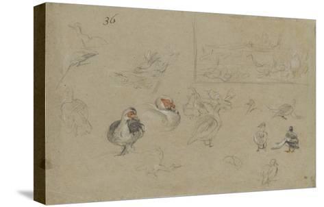 Etudes de canards-Pieter Boel-Stretched Canvas Print