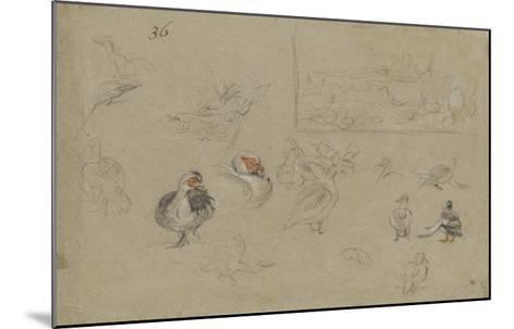 Etudes de canards-Pieter Boel-Mounted Giclee Print