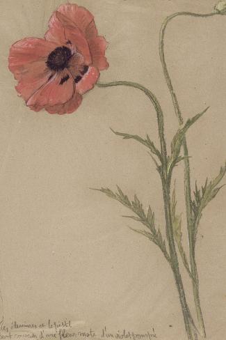 Etude d'un coquelicot-Th?ophile Alexandre Steinlen-Stretched Canvas Print