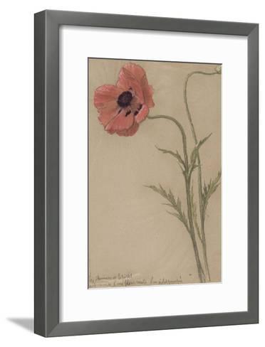Etude d'un coquelicot-Th?ophile Alexandre Steinlen-Framed Art Print