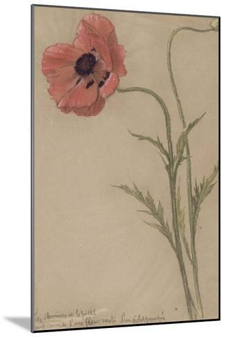 Etude d'un coquelicot-Th?ophile Alexandre Steinlen-Mounted Giclee Print