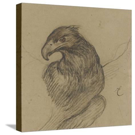Etude d'un vautour-Pieter Boel-Stretched Canvas Print