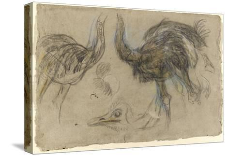 Etude de deux autruches debout et d'une tête-Pieter Boel-Stretched Canvas Print