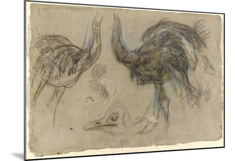 Etude de deux autruches debout et d'une tête-Pieter Boel-Mounted Giclee Print