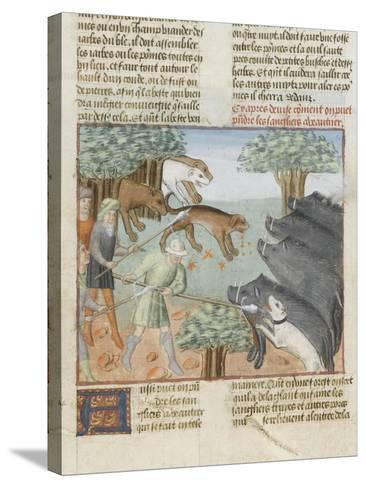 Le Livre de la chasse de Gaston Phébus : chasse aux sangliers--Stretched Canvas Print