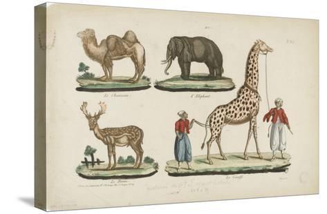Le chameau, l'?l?phant, le daim, la girafe--Stretched Canvas Print