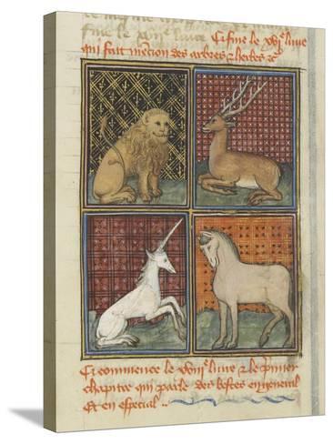 Le Livre des propriétés des choses (De proprietatibus rerum)--Stretched Canvas Print