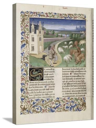 """Le Rustican ou """"Livre des proffitz champestres et ruraulx"""" par Pietro de Crescenzi-du Boccace de Genève Maître-Stretched Canvas Print"""