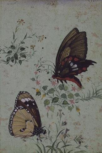 Deux papillons parmi les fleurs--Stretched Canvas Print