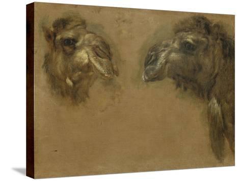 Deux têtes de dromadaires-Pieter Boel-Stretched Canvas Print