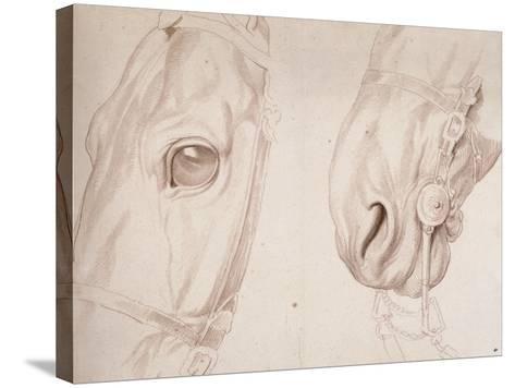 Deux études partielles d'une tête de cheval bridée-Edme Bouchardon-Stretched Canvas Print