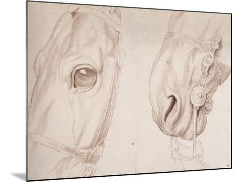 Deux études partielles d'une tête de cheval bridée-Edme Bouchardon-Mounted Giclee Print