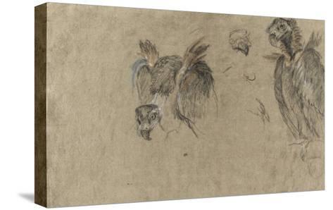 Deux études de vautour et deux détails-Pieter Boel-Stretched Canvas Print