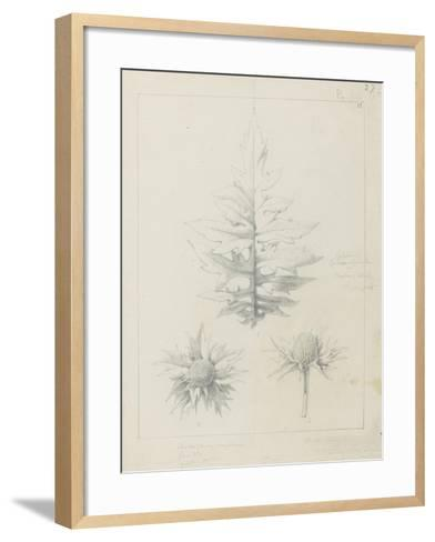 Etude de feuilles de echirops, de sphoerophalus, chardon cultivé, de chardon sauvage de la mer, de-Robert-Victor-Marie-Charles Ruprich-Framed Art Print