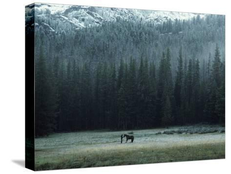 A Packhorse Is Turned Loose to Graze a Meadow-James L^ Amos-Stretched Canvas Print