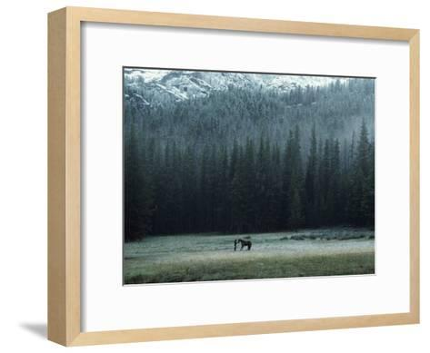 A Packhorse Is Turned Loose to Graze a Meadow-James L^ Amos-Framed Art Print