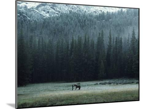 A Packhorse Is Turned Loose to Graze a Meadow-James L^ Amos-Mounted Photographic Print