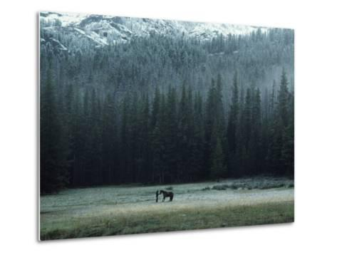 A Packhorse Is Turned Loose to Graze a Meadow-James L^ Amos-Metal Print