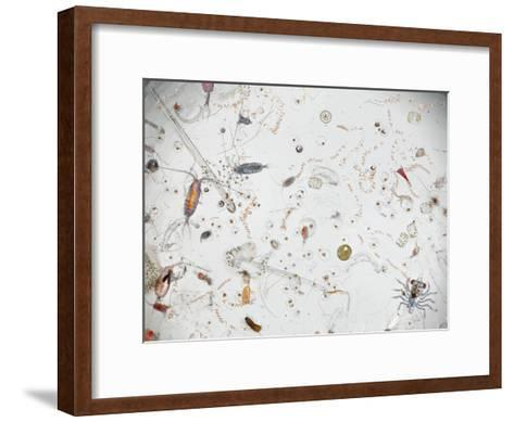 Under a Magnifier, a Splash of Seawater Teems with Life-David Liittschwager-Framed Art Print