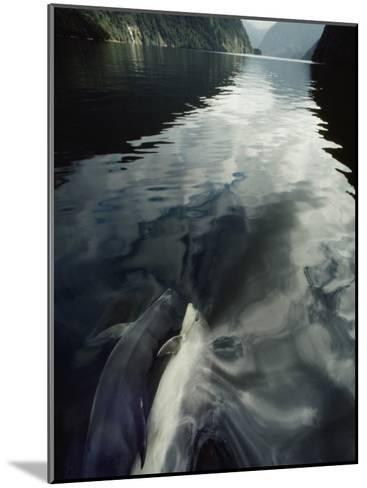 A Pair of Bottlenose Dolphins Ride the Bow Wave of a Research Vessel-David Doubilet-Mounted Photographic Print