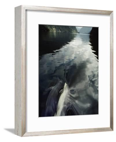 A Pair of Bottlenose Dolphins Ride the Bow Wave of a Research Vessel-David Doubilet-Framed Art Print