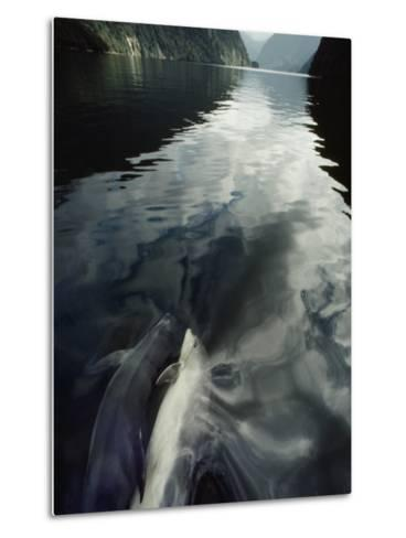 A Pair of Bottlenose Dolphins Ride the Bow Wave of a Research Vessel-David Doubilet-Metal Print