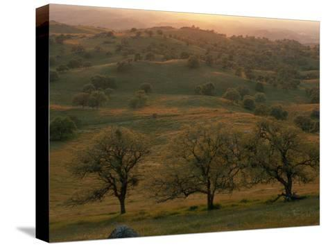 Rolling Foothills of the Sierra Nevada, Spotted with Oak Trees-Phil Schermeister-Stretched Canvas Print