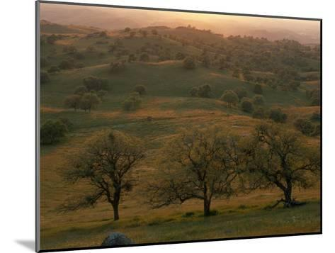 Rolling Foothills of the Sierra Nevada, Spotted with Oak Trees-Phil Schermeister-Mounted Photographic Print