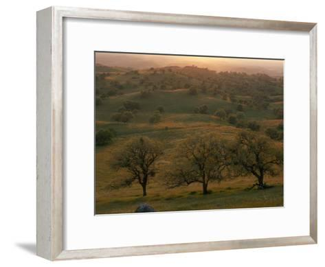 Rolling Foothills of the Sierra Nevada, Spotted with Oak Trees-Phil Schermeister-Framed Art Print