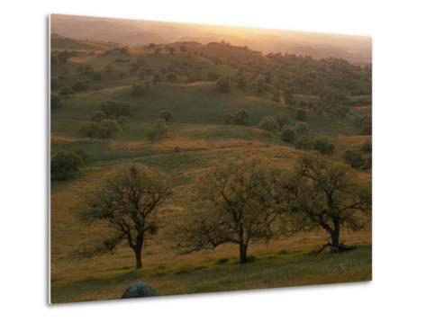 Rolling Foothills of the Sierra Nevada, Spotted with Oak Trees-Phil Schermeister-Metal Print