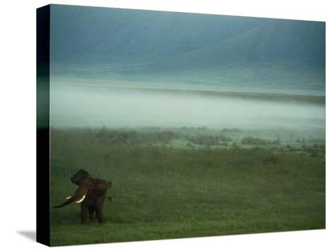 An African Elephant in the Ngorongoro Crater-Chris Johns-Stretched Canvas Print