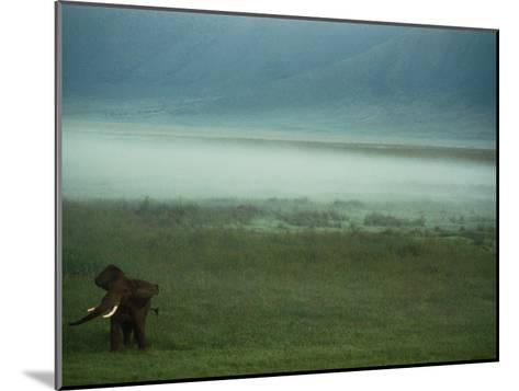 An African Elephant in the Ngorongoro Crater-Chris Johns-Mounted Photographic Print